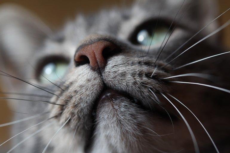 Cat picture up close
